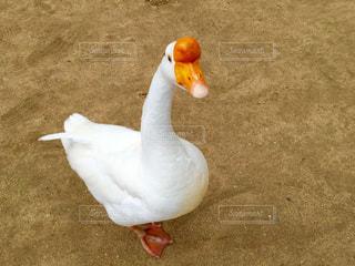 動物の写真・画像素材[551904]