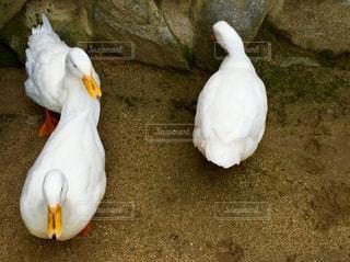 動物の写真・画像素材[551960]
