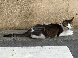 猫 - No.561293