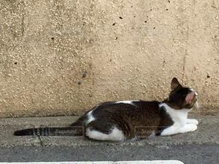 猫 - No.561295
