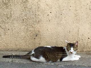 猫 - No.561298