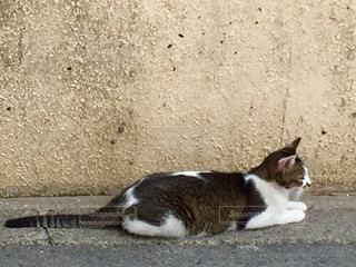 猫 - No.561300