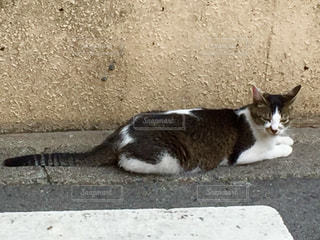 猫 - No.561336