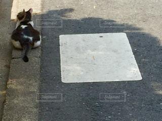 猫の写真・画像素材[561356]
