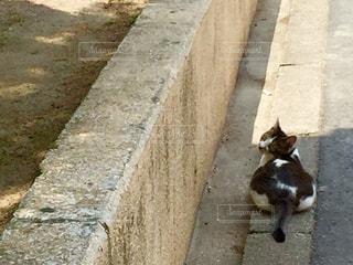 猫の写真・画像素材[561360]
