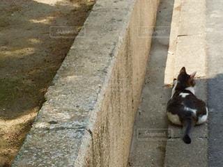 猫の写真・画像素材[561370]