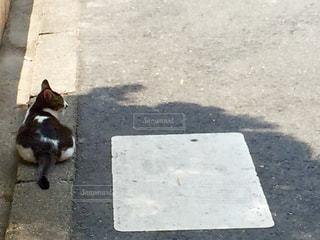 猫の写真・画像素材[561372]
