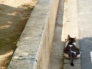 猫の写真・画像素材[561376]