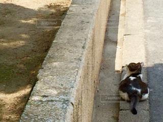 猫の写真・画像素材[561377]