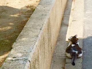 猫の写真・画像素材[561378]