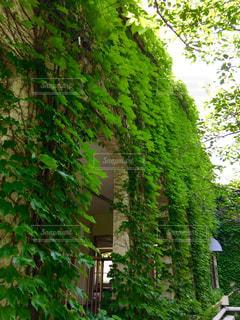 風景の写真・画像素材[562607]