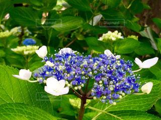 花の写真・画像素材[562667]