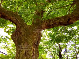 木の写真・画像素材[562670]