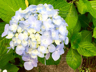 花の写真・画像素材[562672]