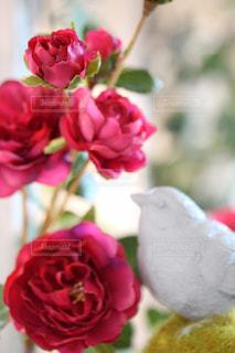 花の写真・画像素材[563012]