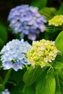 花の写真・画像素材[565093]