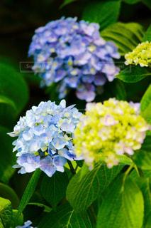 花の写真・画像素材[565100]