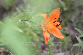 花の写真・画像素材[565576]