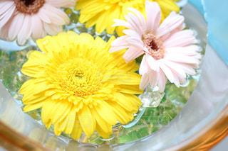 花の写真・画像素材[567309]
