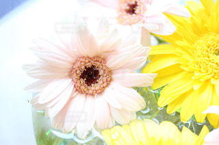 花の写真・画像素材[567311]
