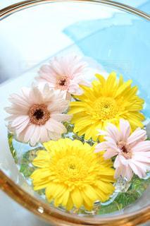 花の写真・画像素材[567345]