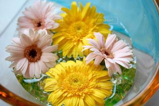 花の写真・画像素材[567358]