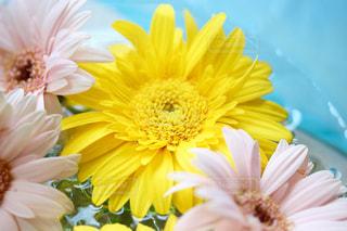 花の写真・画像素材[567359]