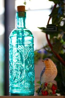 鳥の写真・画像素材[567803]