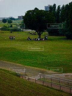 草原の写真・画像素材[581095]