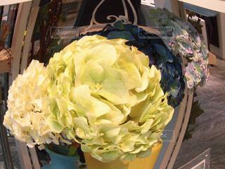 花の写真・画像素材[581127]