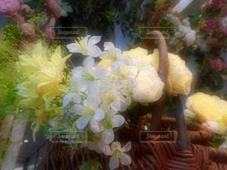 花の写真・画像素材[581129]