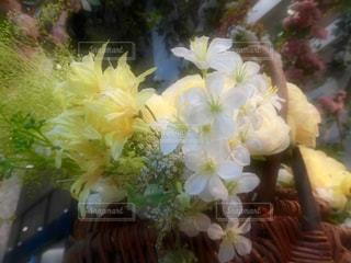 花の写真・画像素材[581130]
