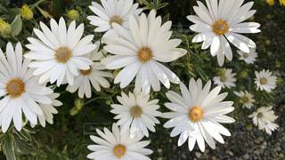 花の写真・画像素材[443569]