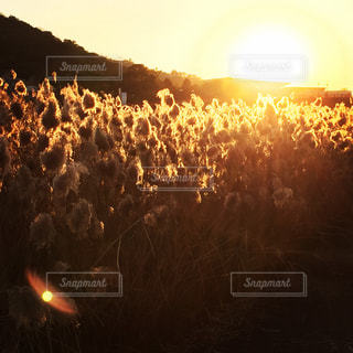 夕日の写真・画像素材[422930]