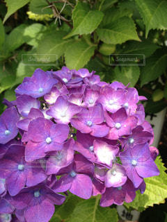 花の写真・画像素材[431820]