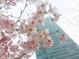 花の写真・画像素材[422494]