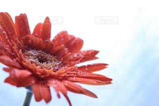 花の写真・画像素材[422531]