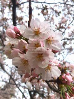 花の写真・画像素材[422483]