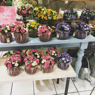 花の写真・画像素材[426849]
