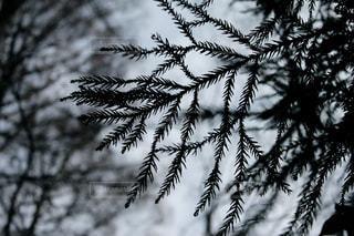 冬の写真・画像素材[422603]