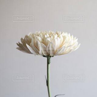 花の写真・画像素材[528354]