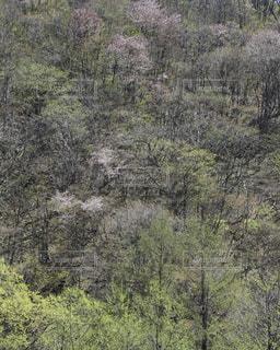springの写真・画像素材[528366]