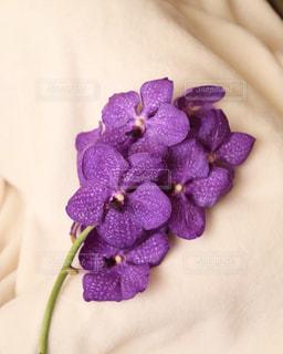 花のある生活の写真・画像素材[1682712]