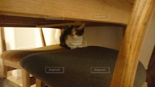 猫の写真・画像素材[428774]