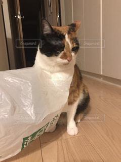 猫の写真・画像素材[428784]