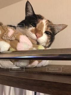猫の写真・画像素材[428786]