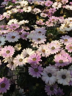 花の写真・画像素材[424182]