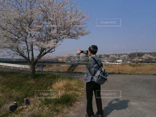 桜の写真・画像素材[423774]