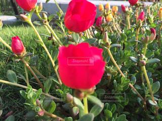 花の写真・画像素材[427607]