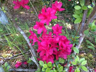 花の写真・画像素材[427614]